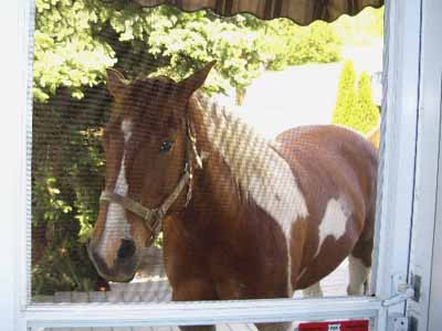 horse at screen door