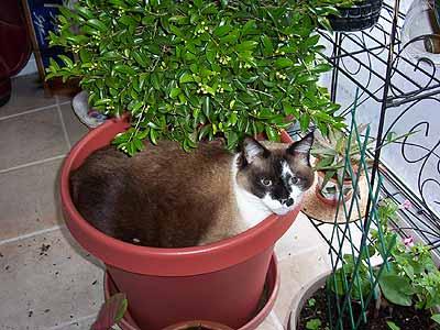 cat sitting in plant pot