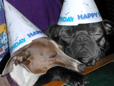 two dogs in party hats