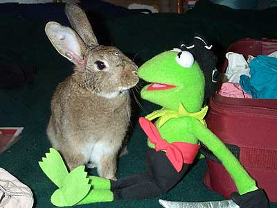 rabbit and kermit the frog doll