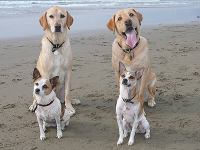 four dogs on beach