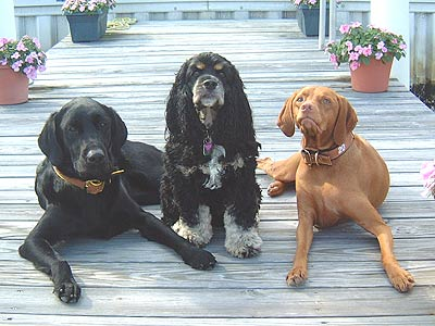 3 dogs on a dock