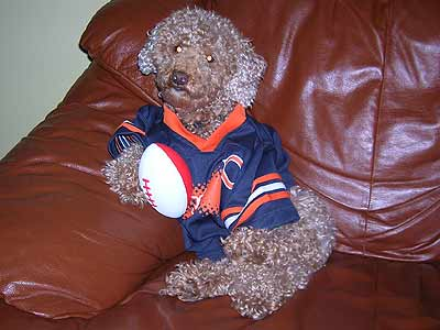 dog in Bears jersey