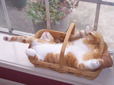 cat sleeping in basket