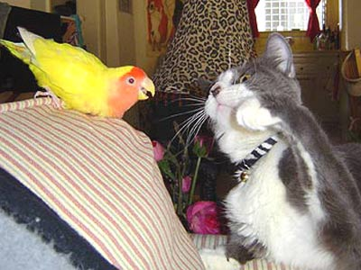 bird and cat playing