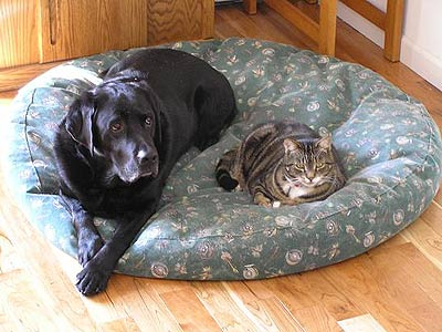 dog and cat sharing pet bed