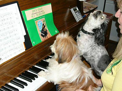 dogs playing the piano
