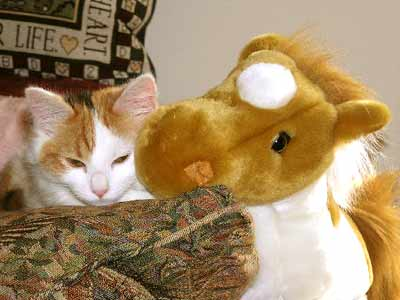 cat with stuffed horse