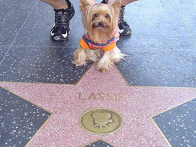 dog by star on Hollwood Walk of Fame
