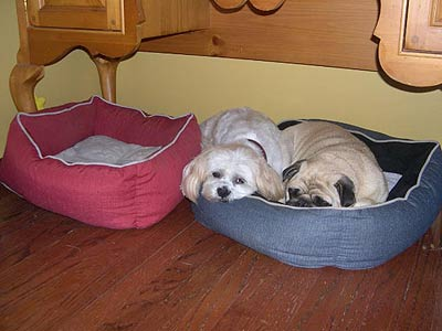 two pups in one dog bed