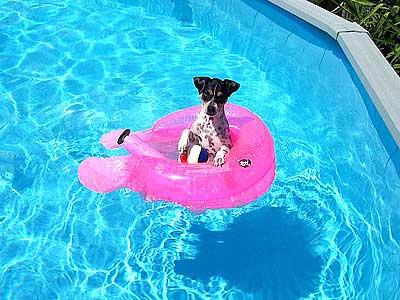 terrier on pool float