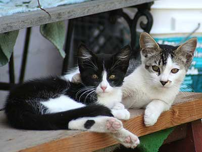 two kittens on a bench