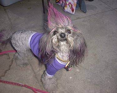 dog with purple fur