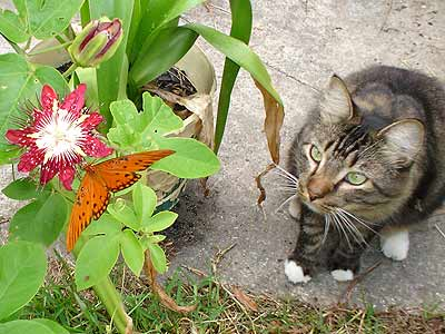 cat watching a butterfly