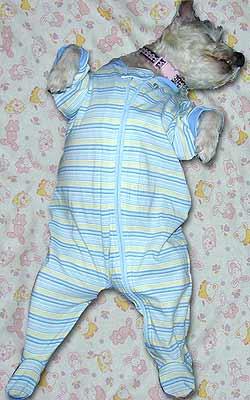 dog asleep in pajamas